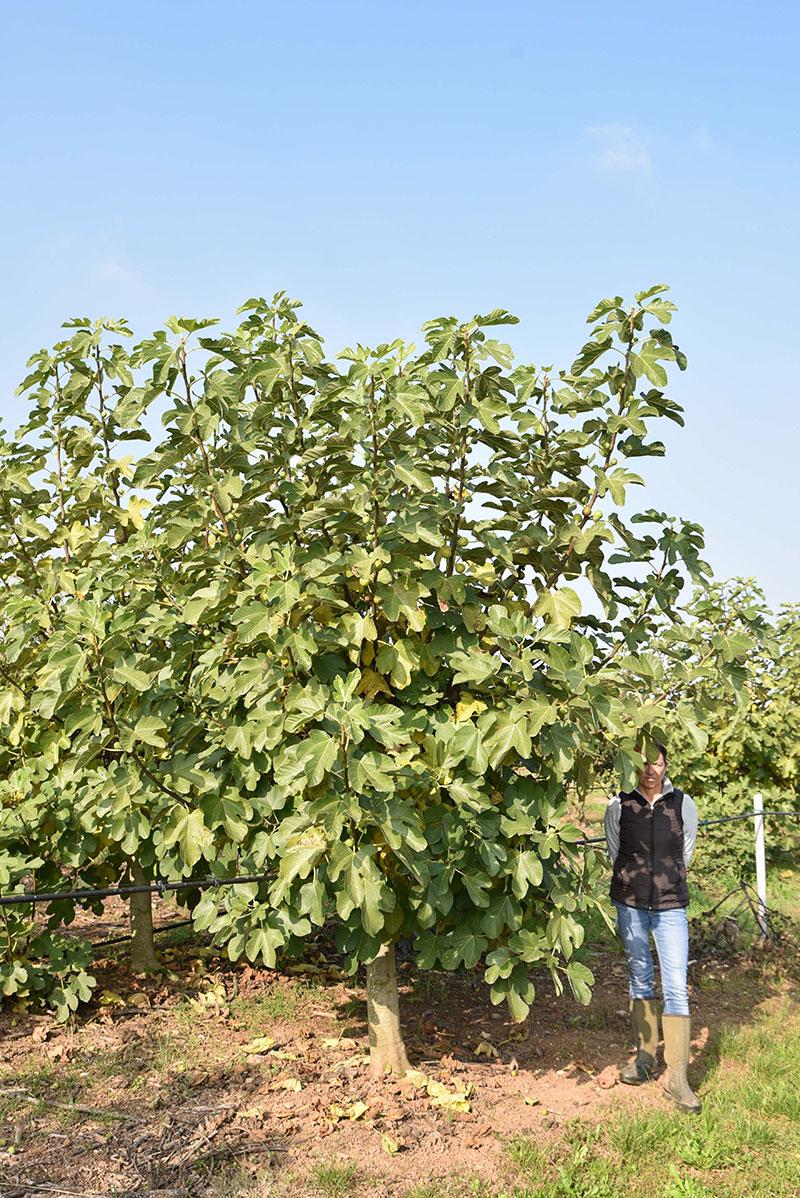 Piante da frutto in piena terra archivi vivaio dei molini for Piante da cespuglio
