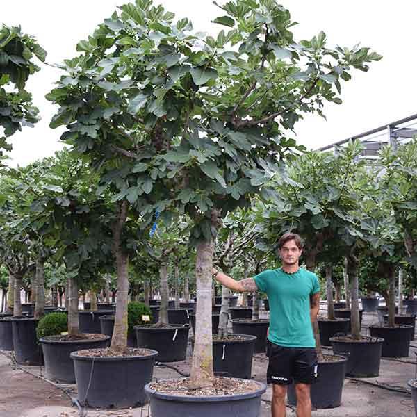Piante Da Frutto In Vaso : Piante da frutto archivi vivaio dei molini