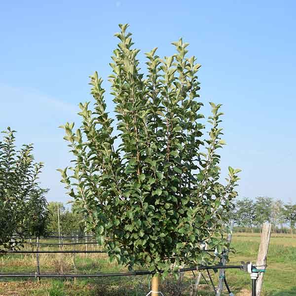 Piante da frutto archivi vivaio dei molini for Piante da frutto a 1000 metri